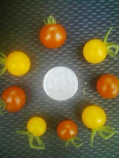 一円玉と比較