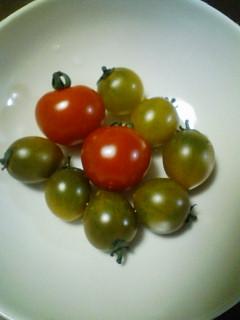 珍しいトマト