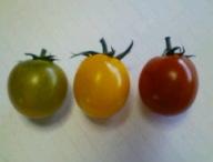 3種類トマト