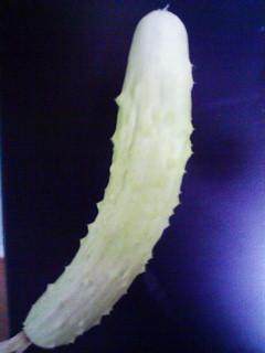 珍しい胡瓜