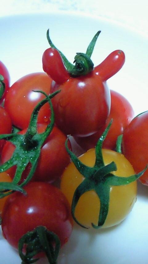 トマト達のかくれんぼ